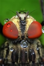 Preview iPhone wallpaper Fly macro photography, eyes, water droplets