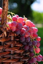 Preview iPhone wallpaper Fresh red grapes, basket, fruit