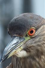 Preview iPhone wallpaper Gray pigeon, beak