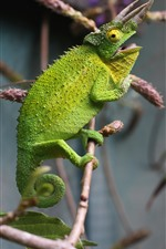 Preview iPhone wallpaper Green chameleon, lizard, horns