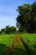 Preview iPhone wallpaper Green field, trees, path, nature scenery
