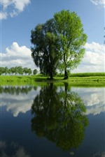 Green trees, pond, water reflection, summer