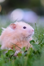 Preview iPhone wallpaper Hamster, tea, grass, funny animals