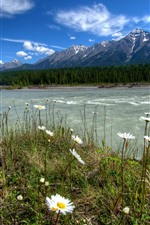 Preview iPhone wallpaper Kootenay, Canada, daisies, river, trees, mountains, nature landscape