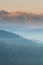 Preview iPhone wallpaper Mountains, fog, trees, nature landscape, morning