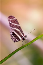 Preview iPhone wallpaper One butterfly, green grass leaf, insect