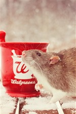 Preview iPhone wallpaper Rat, snow, cup, winter
