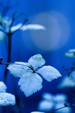 Algumas folhas, fundo azul