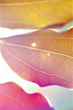 Some leaves, glare