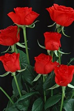 Preview iPhone wallpaper Some red roses, black background