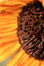 Preview iPhone wallpaper Sunflower close-up, petals, pistil