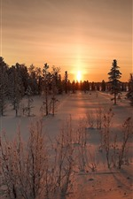 Preview iPhone wallpaper Sunset, snow, trees, winter, dusk
