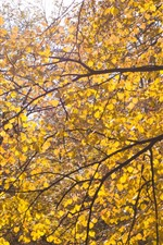 Preview iPhone wallpaper Tree, yellow leaves, twigs, autumn