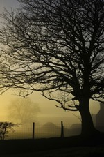 Preview iPhone wallpaper Trees, fence, village, sunrise, fog, morning
