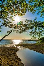 Árvores, folhas verdes, mar, raios de sol
