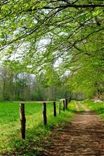 Árvores, caminho, cerca, campos, verde