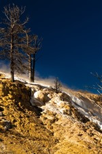 Trees, slope, snow, winter