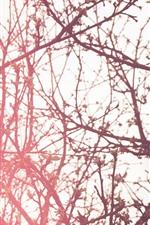 iPhone обои Деревья, веточки, весна, бутоны, блики