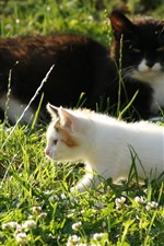 Preview iPhone wallpaper Two cats, grass, sunshine