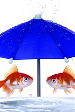 Preview iPhone wallpaper Two golden fish, blue umbrella, water, creative picture