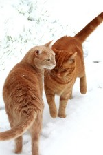 Preview iPhone wallpaper Two orange cats, white snow, winter