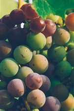 Vine, leaves, fresh grapes, fruit