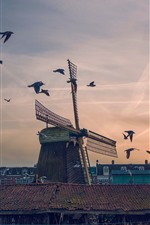 Preview iPhone wallpaper Windmill, birds, sunset, city