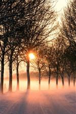 Inverno, estrada, neve, árvores, raios de sol, manhã, nevoeiro