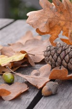 Preview iPhone wallpaper Yellow leaves, acorn