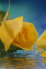 Preview iPhone wallpaper Yellow rose close-up, petals, water droplets