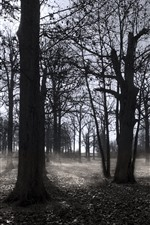Preview iPhone wallpaper Autumn, trees, fog, black and white picture