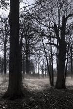 iPhone壁紙のプレビュー 秋、木々、霧、白黒写真