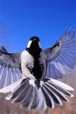 Preview iPhone wallpaper Bird flapping wings, flight