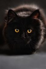 Black cat, rest, face, front view, yellow eyes