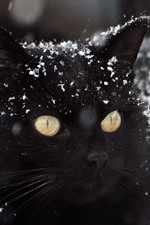 Preview iPhone wallpaper Black cat, snow, winter