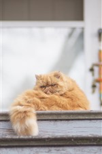 Preview iPhone wallpaper Cat rest, tail, ladder