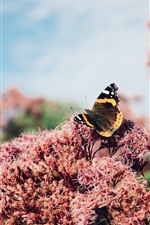 Preview iPhone wallpaper Flowers, butterfly, hazy