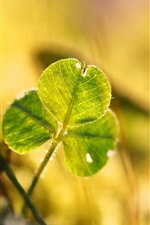 Preview iPhone wallpaper Green clover leaves, sunshine, hazy