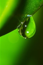 Preview iPhone wallpaper Green leaf macro photography, one water droplet