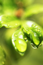 Preview iPhone wallpaper Green leaves close-up, water droplets, glare
