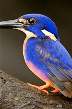 Preview iPhone wallpaper Kingfisher, blue feather