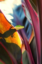 Preview iPhone wallpaper Lizard, red leaves, shadow