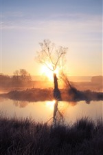 Preview iPhone wallpaper Morning, tree, sunrise, pond, fog, grass