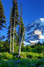 Preview iPhone wallpaper Mount Rainier, mountains, trees, green, snow, flowers, USA