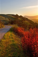Mountains, road, red leaves, plants, fog, sunrise, morning