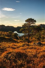 Preview iPhone wallpaper Norway, grass, trees, lake, sunshine, autumn