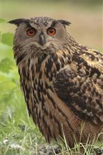 Preview iPhone wallpaper One owl, grass, bird