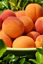One plate of apricots, peaches, green leaves, fruit