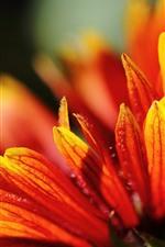 Preview iPhone wallpaper Orange flower close-up, petals, hazy