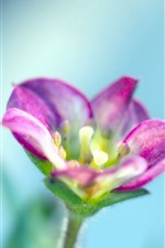 Preview iPhone wallpaper Pink flower close-up, petals, hazy blue background